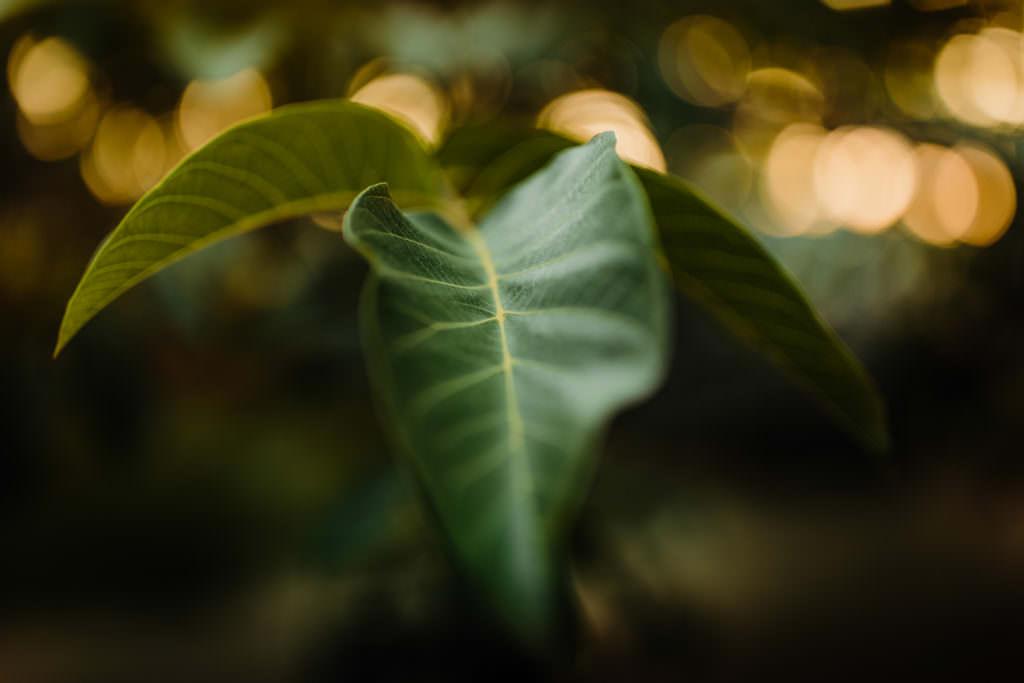 Canon 6DII teszt | Seres Zsolt fotós 002