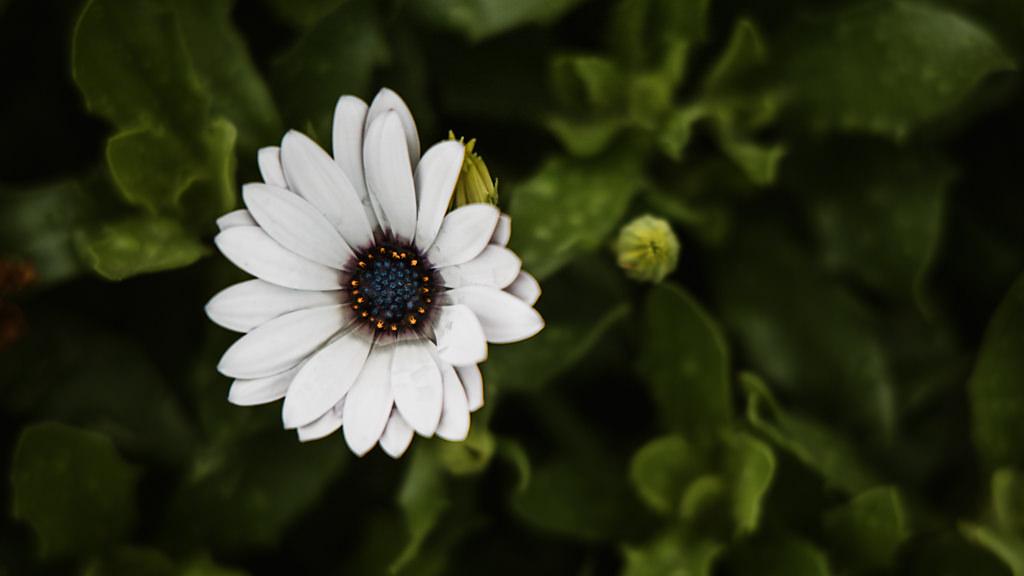 Canon EOS R teszt review virág | Seres Zsolt fotós 001