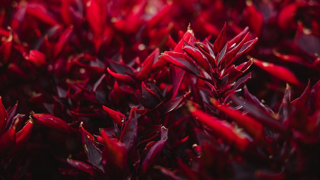 Canon EOS R teszt review virág2 | Seres Zsolt fotós 002