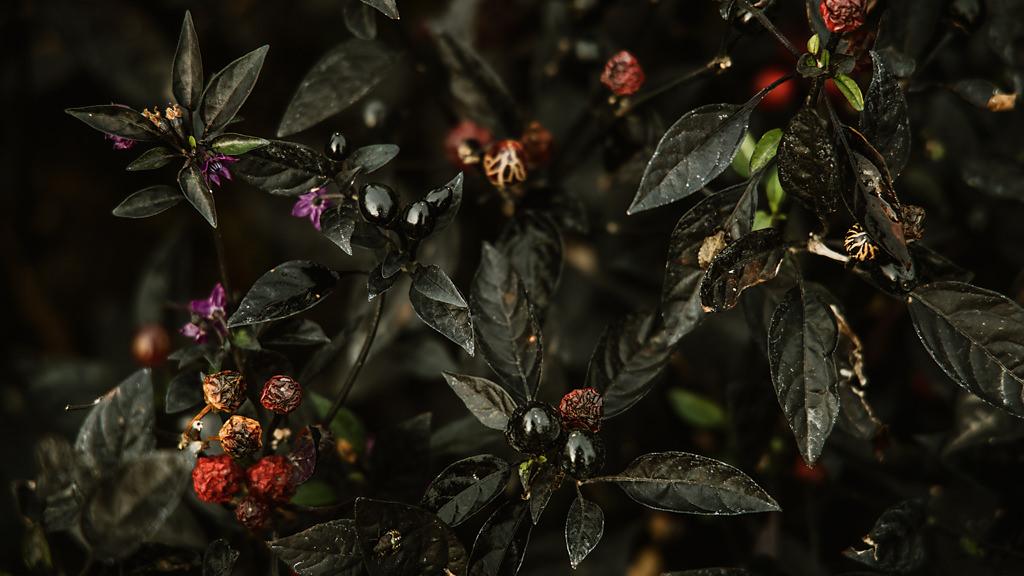 Canon EOS R teszt review bogyók | Seres Zsolt fotós 003