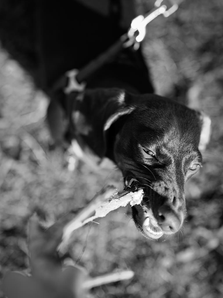 Kutyafotózás LULU 004 | Seres Zsolt fotós