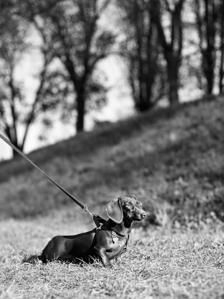 Kutyafotózás LULU 005 | Seres Zsolt fotós