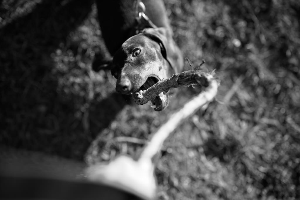 Kutyafotózás LULU 006 | Seres Zsolt fotós