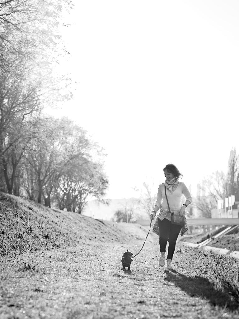Kutyafotózás LULU 007 | Seres Zsolt fotós