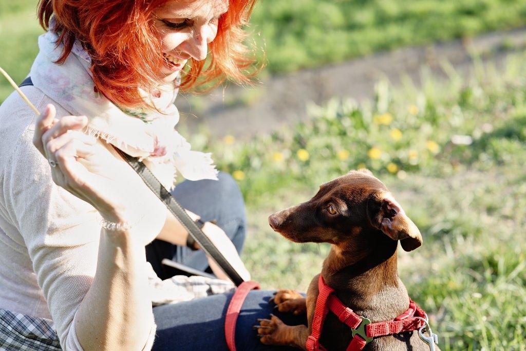Kutyafotózás LULU 010 | Seres Zsolt fotós